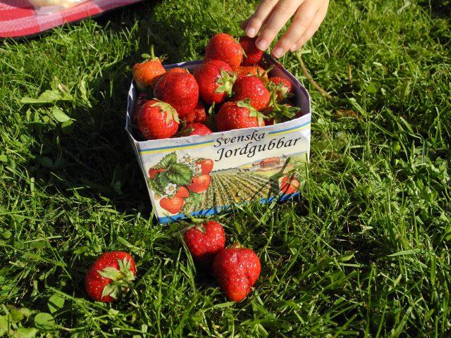 svenska-jordgubbar[1]
